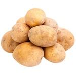 Cartof alb MD